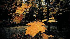 Pr C. J. Jacinto: Folhas e Estações