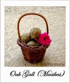 5 Amazing Health Benefits, Uses of Oak Gall | Manjakani including #vaginal tightening
