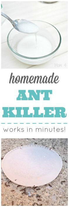 Homemade Ant Killer - Works In Minutes! - Mom 4 Real - Homemade Ant Killer – Works In Minutes! Homemade Ant Killer, Ant Traps Homemade, Real Homemade, Ant Killer Recipe, Homemade Bug Spray, Diy Spring, Summer Diy, Get Rid Of Ants, Insecticide