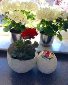 Frühlingsdeko selbst gemacht: Schale aus Pappmaché | Весенняя декорация своими руками: Вазочки из папье-маше. #diy #deko #frühling #весна #spring Plants, Flora, Plant
