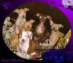 Z litter #rescuemutt #fureverhome #rescue #whywerescue #adoptdontshop #dog #resuepups #dogsofinstagram #pupsofinstagram #rescueonly #dogs #doglover #mixbreed #ilovedogs #puppy #pup #rescuedog #puppylove #dogsofadirondacksaveastray #shelterdogsrock #mansbestfriend #dogstagram #pet #ilovemydog #adoptme #followme #savealife #petfinders #adoptapet #adoption