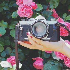 𓈓𓂃𓂂𓇬 1つ前の写真で持っていたのがこのフィルムカメラです❣︎ デジタルもフィルムもOLYMPUSのOMDを使ってますෆ̈