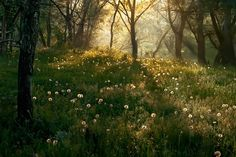Mystic world of magic. If you like handsome vikings, Scandinavia, wild nature and magic, it's a place for you. Des Fleurs Pour Algernon, Ar Fresco, Beautiful World, Beautiful Places, Meadow Garden, Nature Aesthetic, All Nature, Jolie Photo, Aesthetic Pictures