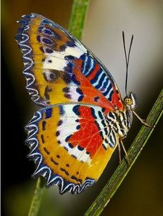 "Unidentified butterfly .        (""Eterno colorido. #butterflies #mariposas."""