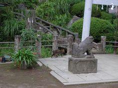 Thursday : Hatonomori Hachiman, Sendagaya by hidelafoglia, via Flickr