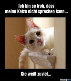 Ich bin so froh, dass meine Katze nicht sprechen kann... Sie weiß zuviel! #katzen