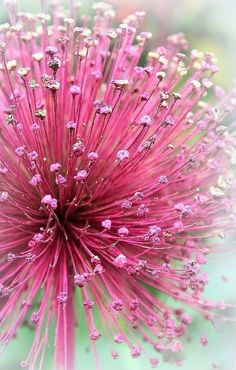 Pink in bloom. Inspiration for #pink #gem