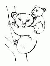 fete des meres koala