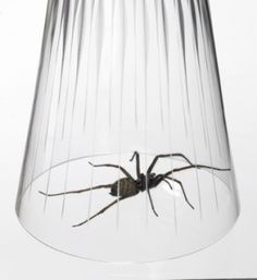Natural Ways to Get Rid of Spiders
