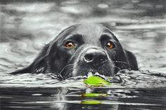 reservoirdog2