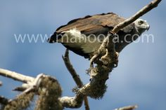 Bird of Prey - One of many species of birds at Bundala National Park