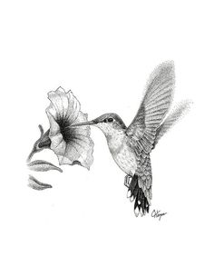 Hummingbird art print by Colin Hayes. Our art prints are produced on acid-free papers using archival inks to guarantee that they last a lifetime without fading or loss of color. All art prints include a 1 Hummingbird Flower Tattoos, Hummingbird Sketch, Hummingbird Tattoo Watercolor, Hummingbird Painting, Bird Drawings, Tattoo Drawings, Cute Tattoos, Black Tattoos, Blue Ink Tattoos