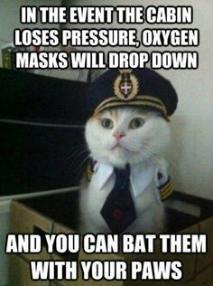 Captain Kitty... Either this is hilarious or I'm over tired! Or both :)