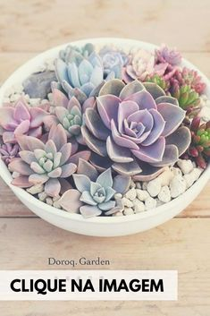 Types Of Succulents, Succulents In Containers, Cacti And Succulents, Planting Succulents, Potted Plants, Garden Plants, Indoor Plants, House Plants, Planting Flowers