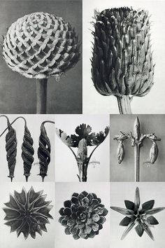 art fotografia Karl Blossfeldt a German artist and professor, captured these art forms in nature and used them to instruct his students. More of Blossfeldts portfolio to see at Panteek. (via swissmiss) Natural Form Artists, Natural Forms Gcse, Natural Structures, Karl Blossfeldt, Organic Form, Organic Shapes, Botanical Art, Botanical Illustration, Atelier Theme