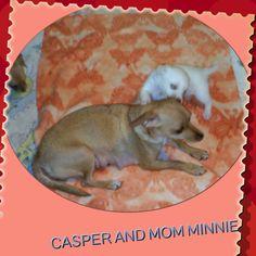 Caspie and mum Minnie