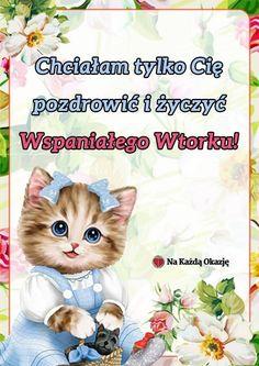 Teddy Bear, Cats, Animals, Google, Polish, Pictures, Gatos, Animales, Animaux