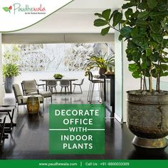 Decorate Office with Indoor Plants. Choose from a wide variety of Indoor Plants Call us at or Visit us at www. Indoor Plants Online, Big Indoor Plants, Big Plants, Outdoor Plants, Plant Nursery, Nursery Decor, Pollution Prevention, Online Nursery, Living Room Remodel