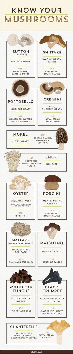 It's time to get your fungus knowledge down with this mushro.-It's time to get your fungus knowledge down with this mushroom infographic It's time to get your fungus knowledge down with this mushroom infographic - Vegetarian Recipes, Cooking Recipes, Healthy Recipes, Healthy Tips, Cooking Hacks, Cooking 101, Couple Cooking, Cooking Quotes, Cooking Beets