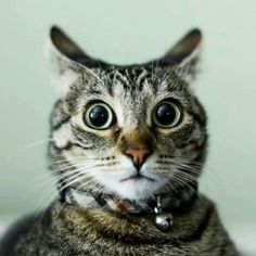 Shocked kitty is shocked