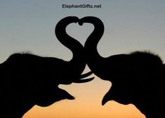 Poster-Thai elephants form a heart shape with trunks in poster sized print mm) made in Australia Bull Elephant, Elephant Camp, Thai Elephant, Elephant Gifts, Funny Elephant, Fine Art Prints, Framed Prints, Canvas Prints, All You Need Is Love
