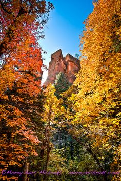 Oak Creek Canyon, AZ (in the fall!) Need to make this trip in a couple of weeks for sure.