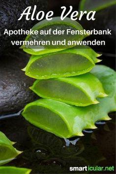 Die Aloe vera ist eine erstaunliche Pflanze mit vielen heilenden Wirkungen. Die wichtigsten Anwendungsgebiete, Tipps zum Anbau und Vermehren dieser Pflanze!: