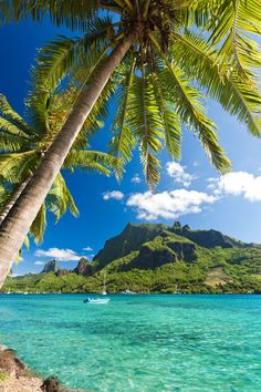 There are so many great things to do in Moorea, Tahiti. This tropical island is an adventure lover's paradise filled with fun acitivities. Big Island Hawaii, Island Beach, Small Island, Beautiful Islands, Beautiful Beaches, Dream Vacations, Vacation Spots, Italy Vacation, Tromso