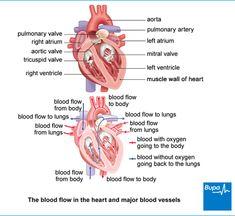 22 Top Rheumatic Heart Disease Images Rheumatic Fever