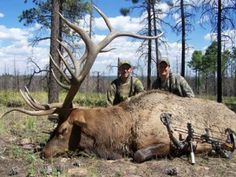 Thats a HUUUUUUGE Elk!....Yeah shame it wasn't allowed to live out it's natural life. Killed by cowards.!