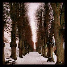 hovisch Mere Barokhaven #frederiksborg #castle #trees #snow #hillerød