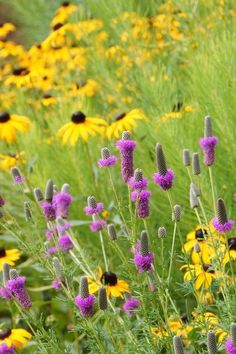 15 Native Flowers That Feed Native Bees These perennials offer superfood to hundreds of bees and are gorgeous in their own right   by Benjamin Vogt   Contemporary  by Adam Woodruff + Associates, Garden Artisans