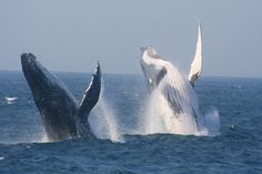 Whale Watching with St Lucia Tours and Charters in Richards Bay, South Africa Southern Caribbean, Picnic Spot, Kwazulu Natal, Adventure Activities, Whale Watching, Adventure Is Out There, Countries Of The World, South Africa, Saints