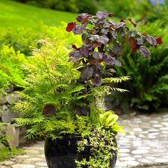 Put Trees and Shrubs in Pots - this and many more great ideas from our friend and customer, Brian Minter