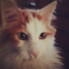 El gato Malbec