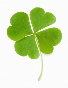 """While opportunity knocks, some people are out in the back yard looking for four leaf clovers."""