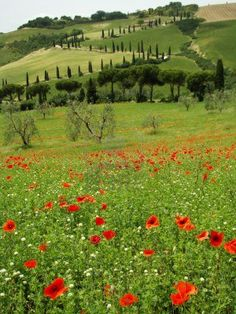 Tuscan scenery, La Foce in The Val d Orcia, UNESCO World Heritage site