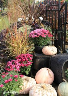 Mums In Pumpkins, Pink Pumpkins, Autumn Painting, Happy Fall Y'all, Container Plants, Color Pallets, Colorful Decor, Fall Decor, Pots