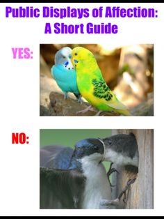 A guide to PDA