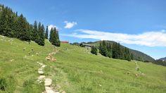 Schöne, einfache und kurze Rundwanderung um den Spitzingsee zur Unteren und Oberen Firstalm. Abstieg über den Spitzingsattel.
