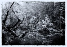 Klagenfurt, Shades Of Grey, Black And White, Abstract, Artwork, Outdoor, Water Pond, Summary, Outdoors