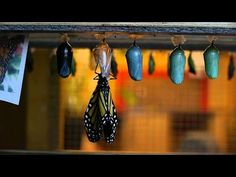 Documentary 2014 The Incredible Story of the Monarch Butterfly F