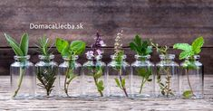 """Do you have a few favorite """"go-to"""" herbs? Why not grow them in water and keep them close at hand on the kitchen window sill or right on the counter? Water-grown herbs are just as Growing Herbs Indoors, Growing Plants, Plants In Jars, Plant Cuttings, Planting Vegetables, Vegetable Gardening, Veggies, Plant Growth, Plantar"""