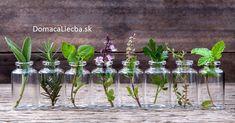 Majte ich vždy po ruke: 10 liečivých byliniek, ktoré môžete pestovať doma po celý rok