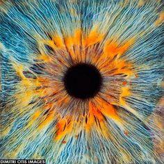 Espectacular ampliación al #microscopio del ojo humano (Imagen de Dimitri Otis)