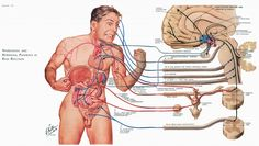 Doctoring The Craft Of Medical Illustration – The Work Of Frank H. Netter, M.D. - Print Magazine