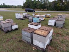 I came across this docile beehives on a chilly day near a Florida Orange Grove... Bee Facts, Florida Oranges, Orange Grove, Outdoor Furniture Sets, Outdoor Decor, Home Decor, Decoration Home, Room Decor, Home Interior Design