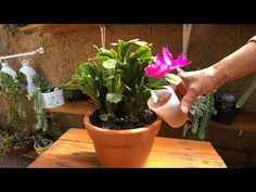 Do Video, Planter Pots, Make It Yourself, Plants, Youtube, Gardening, Birthday, Christmas Cactus, Flower Of May