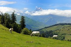 Aspin Pyrenees France. One of the best ways to explore the Pyrénées region is by bike. Find out more about our self-guided cycling trips here: http://www.discoverfrance.com/regions/pyrenees-cycling-tours.php