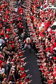 The Dawg Walk! A must do in every Athens game day experience! Georgia Bulldogs Football, Sec Football, Football Tailgate, College Football Teams, Tailgating, Tailgate Parties, Football Season, Football Parties, Athens Georgia